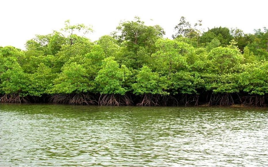 Mangrove Jadi Aneka Penganan